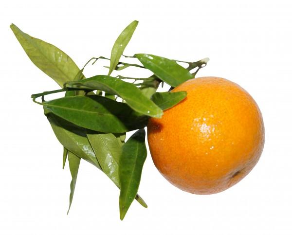 Duft Mandarin